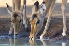 Moremi, Botswana