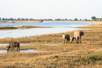 Chobe, Botswana