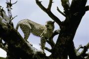 Serengeti National Park. Tansania