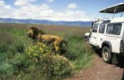 Ngorongoro Conservation Area, Tansania