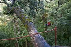 Tsitsikama National Park