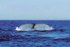 Walen Beobachtung
