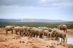 Addo Elefant National Park