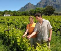 Stellenbosch, Weinroute. Südafrika