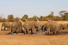 Wasserstelle, Zimbabwe