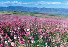 Lesotho, Afro-Alpiner Flora