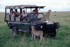 Pirschfahrt, Kenia