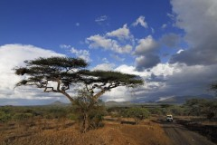 Tsavo Nationalpark, Kenia